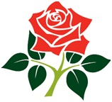 CRICKET ROSE