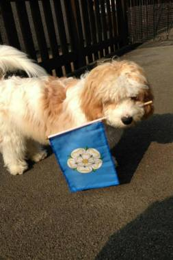 Yorkshire Day 2014 2